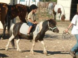 Pony_1