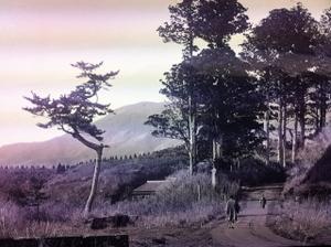 Hakonea